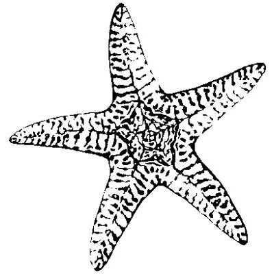 starfish line drawings. Black Bedroom Furniture Sets. Home Design Ideas