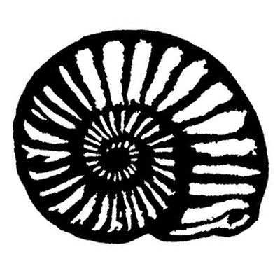 You can order this Ammonite