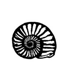 Ammonite Rubber Stamp