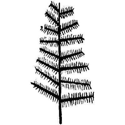 You can order this Feather Tree
