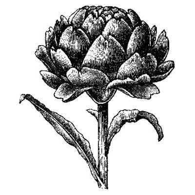 You can order this Artichoke