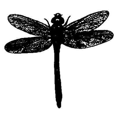 You can order this Dragonfly