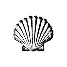 Scallop 2 Rubber Stamp