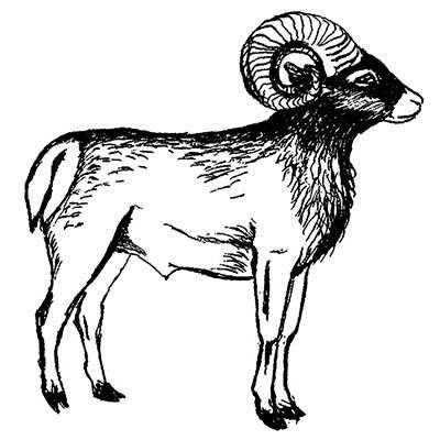 You can order this Bighorn Sheep