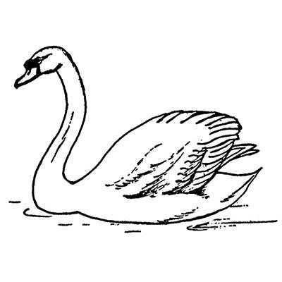 You can order this Swan