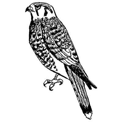 You can order this Kestrel