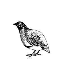 Partridge Rubber Stamp