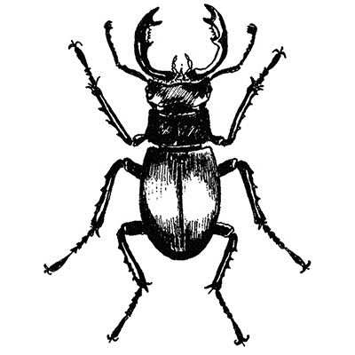 You can order this Stag Beetle
