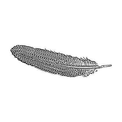 You can order this Guinea Fowl Feather