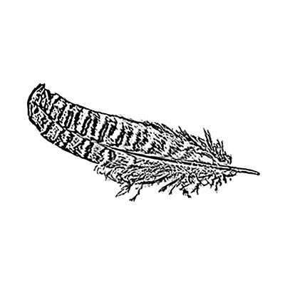 You can order this Pheasant Feather