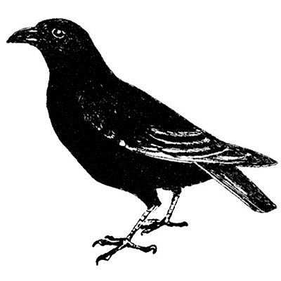 You can order this Black Crow