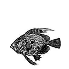 John Dory Rubber Stamp