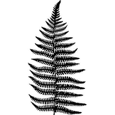 You can order this Woodland Fern