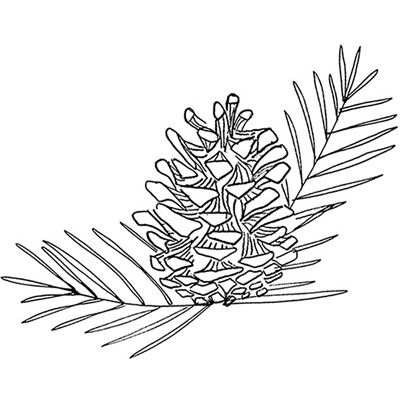 You can order this Forest Pine Cone