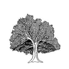 Oak Tree Rubber Stamp