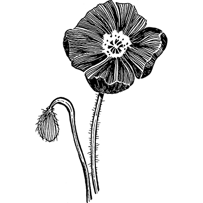You can order this Poppy 2
