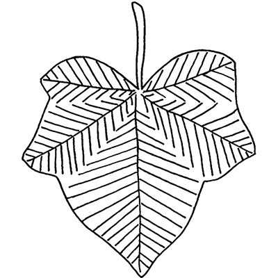You can order this Ivy Leaf