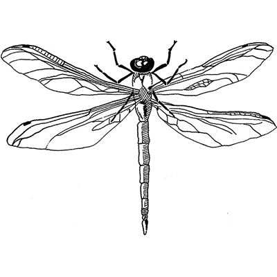 You can order this Dragonfly 2
