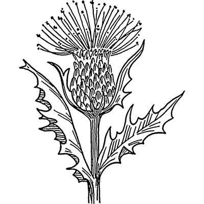 You can order this Scottish Thistle