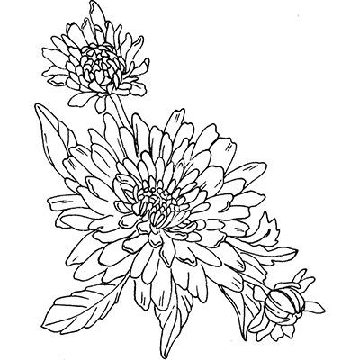 You can order this Dahlia Blooms