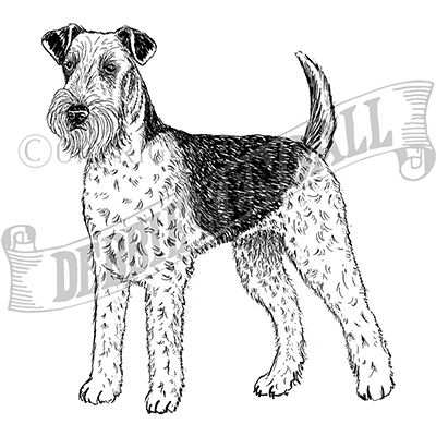 You can order this Airedale Terrier
