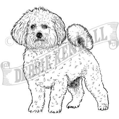 You can order this Bichon Frise