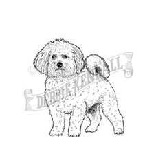 Bichon Frise Personalised Stamp
