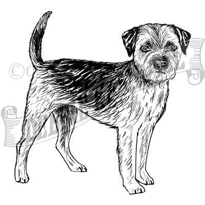 You can order this Border Terrier
