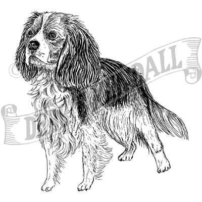 You can order this Cavalier King Charles