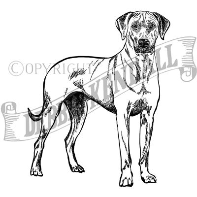 You can order this Rhodesian Ridgeback