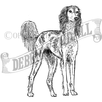 You can order this Saluki