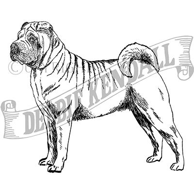 You can order this Shar Pei