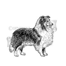 Shetland Sheepdog Personalised Stamp