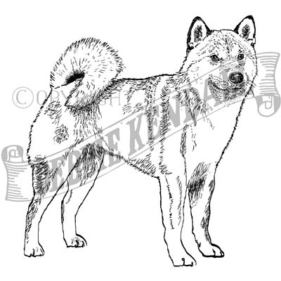 You can order this Shiba Inu