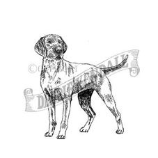 Wire-Haired Vizsla Rubber Stamp