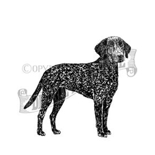 Curly-Coated Retriever Rubber Stamp