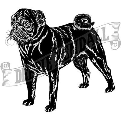 You can order this Black Pug