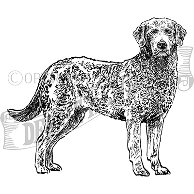 You can order this Brussels Griffon