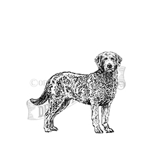 Brussels Griffon Rubber Stamp