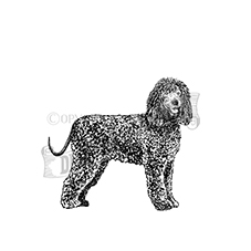 Irish Water Spaniel Rubber Stamp