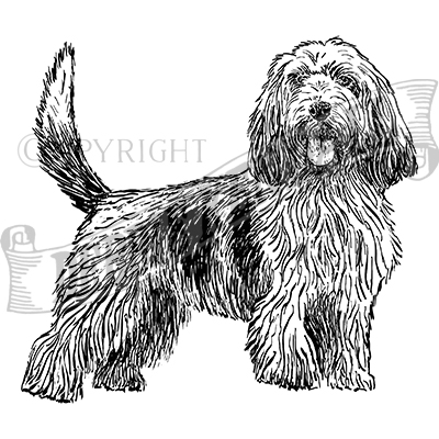 You can order this Petit Basset Griffon Vendeen