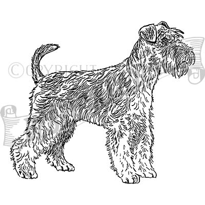 You can order this Miniature Schnauzer