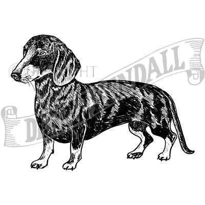You can order this Dachshund (Smooth)