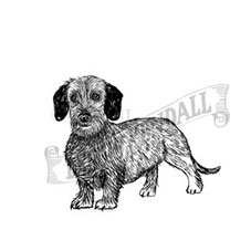 Dachshund (Wire) Personalised Rubber Stamp