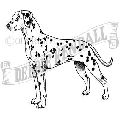 You can order this Dalmatian