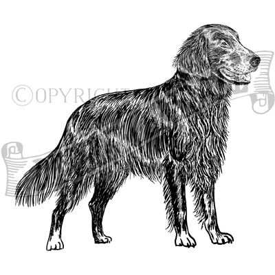 You can order this Flat Coat Retriever
