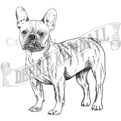You can order this French Bulldog