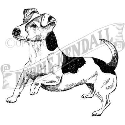 You can order this Jack Russell