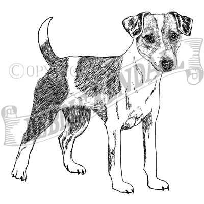 You can order this Parsons Russell Terrier