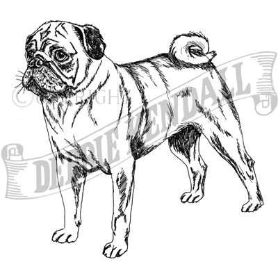 You can order this Pug